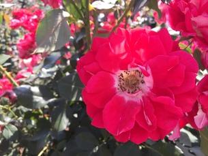 お花畑の写真素材 [FYI01215070]