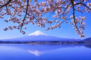 河口湖北岸から見る満開の桜と富士山の写真素材 [FYI01215391]
