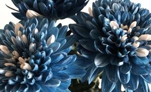 青い花の写真素材 [FYI01215760]