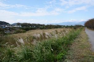 秋の光景 ・ 川沿いのススキの写真素材 [FYI01215763]