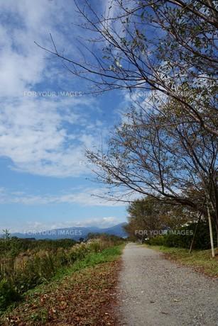 秋の風景 ・川沿いの小道の写真素材 [FYI01215830]