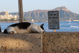 ダイアモンドヘッドと猫の写真素材 [FYI01215980]