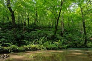 水と緑の写真素材 [FYI01215998]
