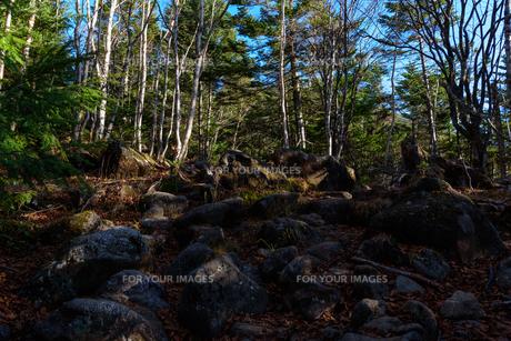 火山の石と立ち枯れの森の写真素材 [FYI01216036]