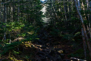 薄暗い森の中の道の写真素材 [FYI01216038]