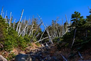 火山の溶岩石と立ち枯れの森の写真素材 [FYI01216053]