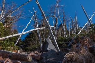 火山の溶岩石と立ち枯れの森の写真素材 [FYI01216054]