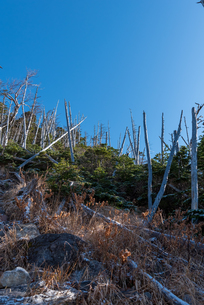 火山の溶岩石と立ち枯れの森の写真素材 [FYI01216055]