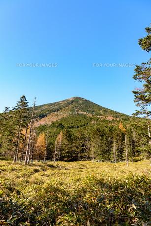 蓼科山の縞枯れと少し色づいた木 縦構図の写真素材 [FYI01216078]