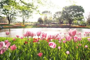 花の写真素材 [FYI01216209]