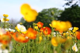 花の写真素材 [FYI01216210]