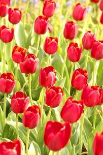 花の写真素材 [FYI01216211]