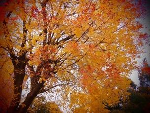 木の写真素材 [FYI01216235]