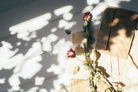 薔薇のドライフラワーとアンティークな封筒と紙と木漏れ日の写真素材 [FYI01216572]