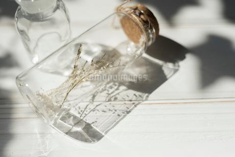 ドライフラワーが入ったガラス瓶の写真素材 [FYI01216598]