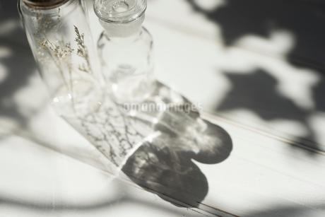 木漏れ日とガラス瓶の写真素材 [FYI01216600]