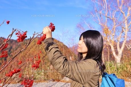 立山黒部アルペンルート 紅葉の旅の写真素材 [FYI01216754]