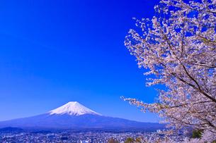 新倉山ハイキングコースから見る満開の桜と富士山の写真素材 [FYI01216901]
