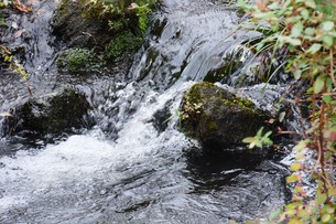 自然公園の小さな滝と小川の写真素材 [FYI01217019]
