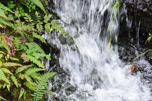 自然公園の小さな滝と小川の写真素材 [FYI01217020]