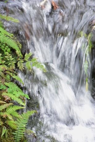 自然公園の小さな滝と小川の写真素材 [FYI01217021]