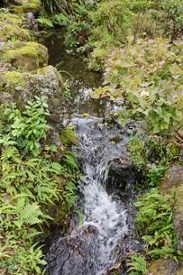 自然公園の小さな滝と小川の写真素材 [FYI01217022]