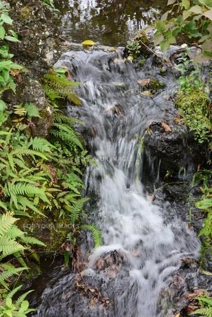 自然公園の小さな滝と小川の写真素材 [FYI01217023]