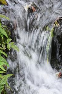 自然公園の小さな滝と小川の写真素材 [FYI01217024]