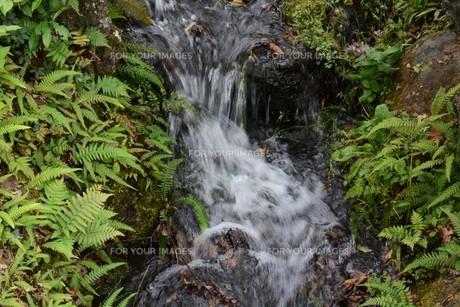 自然公園の小さな滝と小川の写真素材 [FYI01217025]