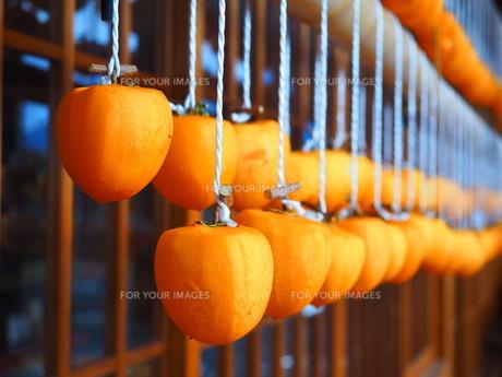 吊るし柿の写真素材 [FYI01217089]