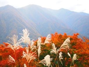 埼玉 秩父 三峰山からの紅葉風景の写真素材 [FYI01217091]