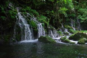 緑や苔の美しい滝ですの写真素材 [FYI01217113]