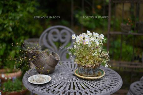 テーブルと花の写真素材 [FYI01217195]
