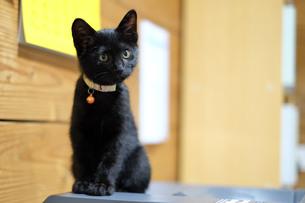 猫の写真素材 [FYI01217492]