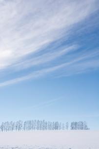 雪の丘とシラカバ並木 美瑛町の写真素材 [FYI01217805]