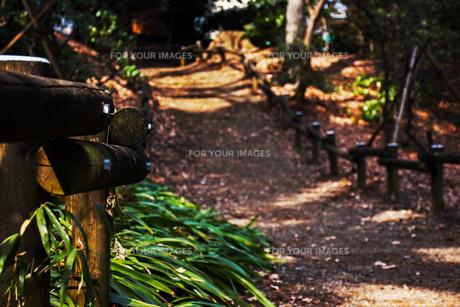 森の小路の写真素材 [FYI01218075]