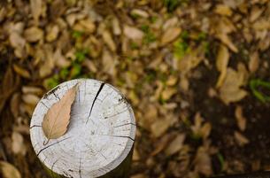 枯葉の風景の写真素材 [FYI01218076]