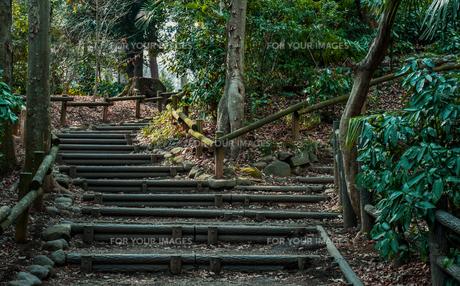 森の小路の写真素材 [FYI01218078]