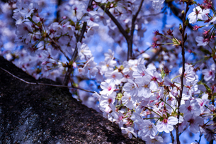 春の香りの写真素材 [FYI01218082]