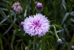 小さな花の写真素材 [FYI01218091]