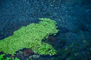 透明な川と水草の写真素材 [FYI01218097]