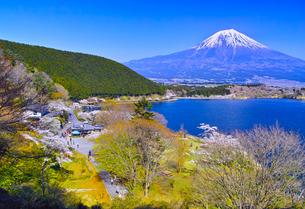 田貫湖から見る満開の桜と富士山の写真素材 [FYI01218279]