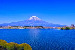 田貫湖から見る満開の桜と富士山の写真素材 [FYI01218282]