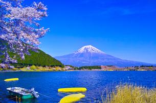 田貫湖から見る満開の桜と富士山の写真素材 [FYI01218291]