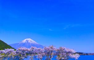 田貫湖から見る満開の桜と富士山の写真素材 [FYI01218292]
