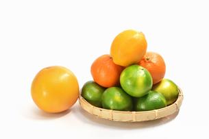 白背景の柑橘類の写真素材 [FYI01218314]