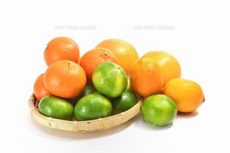 白背景の柑橘類の写真素材 [FYI01218315]