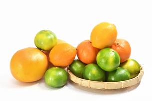 白背景の柑橘類の写真素材 [FYI01218316]