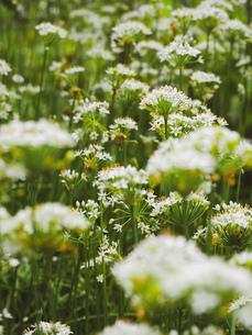 爽やかに風にゆれる草花の写真素材 [FYI01218485]