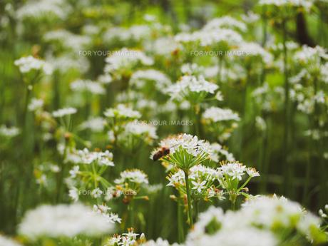 爽やかに風にゆれる草花の写真素材 [FYI01218486]